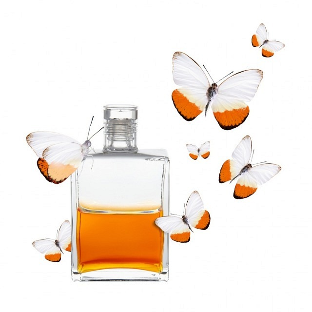 B120 - Klar/Orange - Persephone